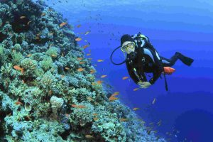 Гмуркане в Бермудски острови