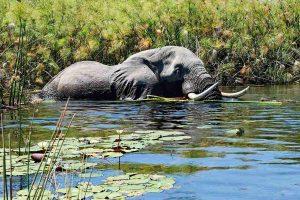 Природата в Ботсвана