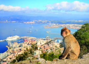 Животни в Гибралтар