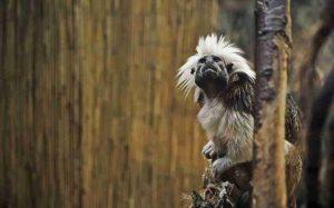 Лемурите в Мадагаскар