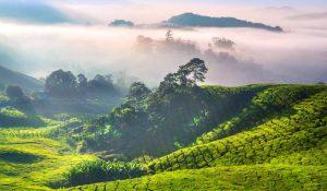 природата в Малайзия