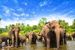 Животни в Шри Ланка