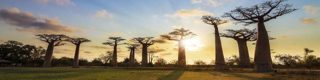 екскурзия Мадагаскар цена